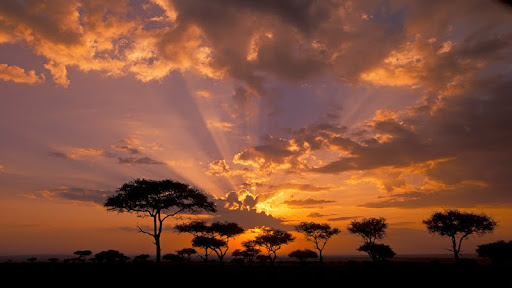 Acacia Trees at Twilight, Masai Mara Game Reserve, Kenya, Africa.jpg