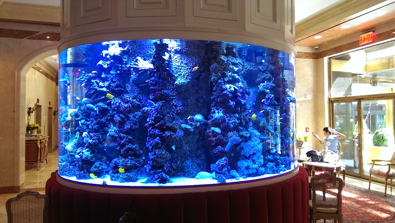 Aquarium in mid town nj reef club for Fish hotel tank