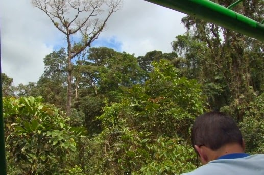 Rain Forest Aereal Tram