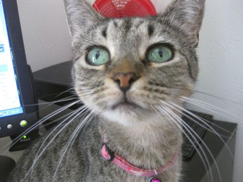 Catsparella It S Caturday