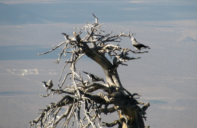 four of those birds in a dead tree
