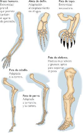 brazos de animales