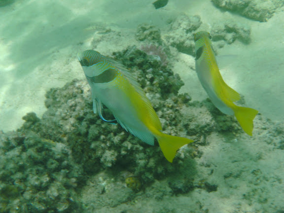 Blog de voyage-en-famille : Voyages en famille, Pulau Besar, Snorkelling
