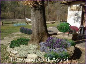 Progetti giardini online gratis progetti giardini privati for Catalogo alberi da giardino