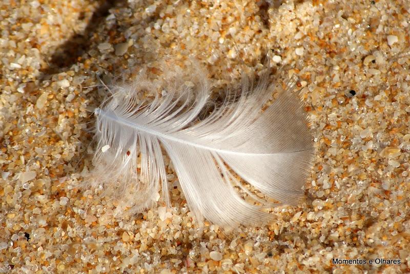 Uma pena na areia da praia