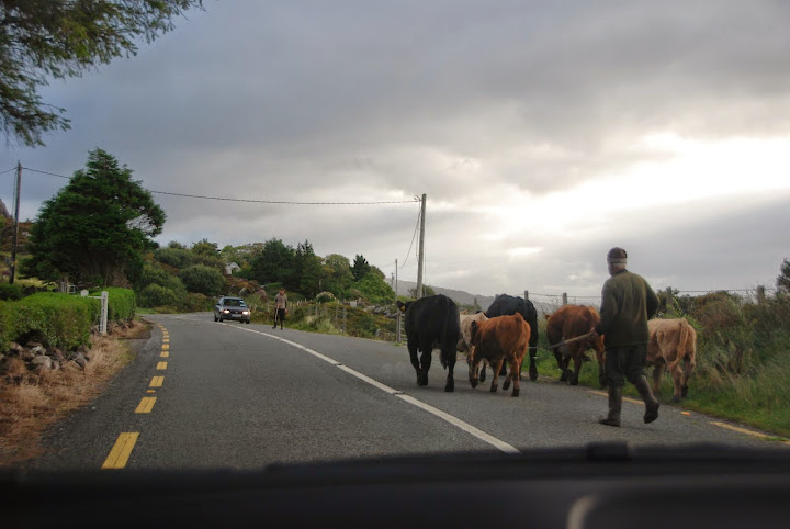 Irish traffic jam. From 5 Tips on Driving in Ireland