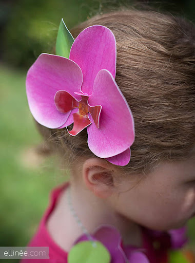 Orquídea pronta