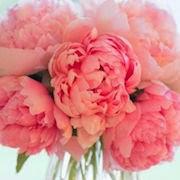 сонник поливать цветы