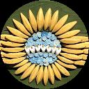 Vinicius Piastra