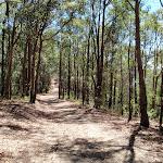 Sid Pulsford trail (237287)