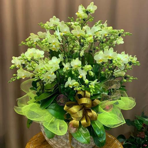Thuy Tran Photo 28