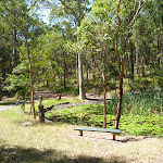 Bench with Lily Pond beyond at Lily Pond Picnic Area in Blackbutt Reserve (401137)