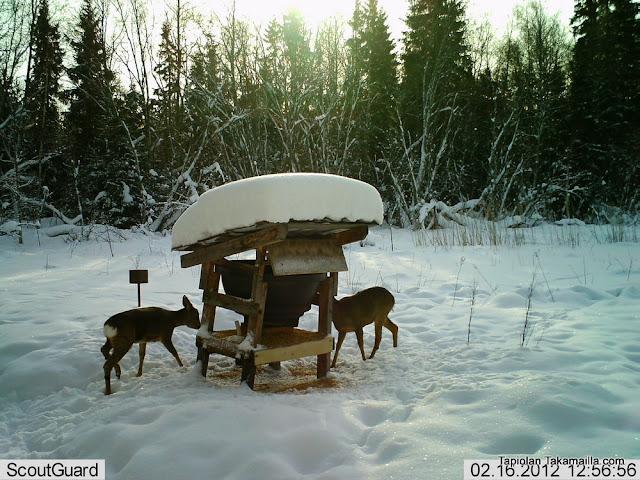 riistakamera riistakameratesti Scout Guard SG560K-8M SG560K metsäkauris riistaruokinta talviruokinta ruokinta-automaatti