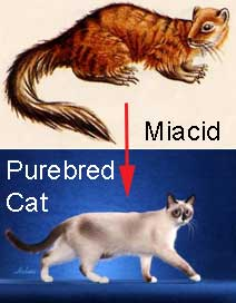 evolution of domestic cat