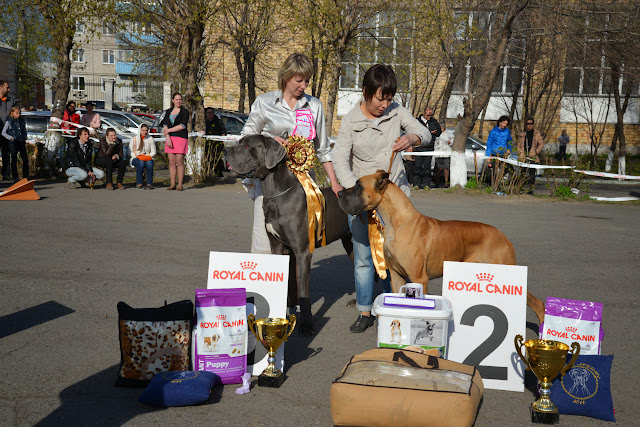 Кубок Аризоны-14(ПК)+ЧРКФ, Красноярск, 27 апреля 2014 DSC_6185