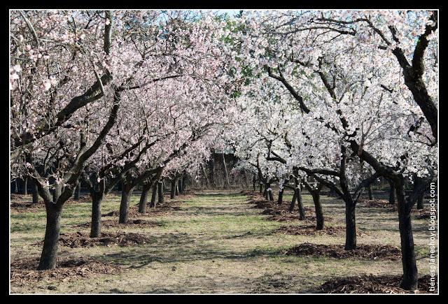 Quinta de los Molinos florecida