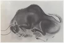 изображения промысловых животных, например, быка или медведя обусловлены намерением повлиять на успех охоты