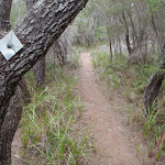 Track marker bolted to tree (105142)