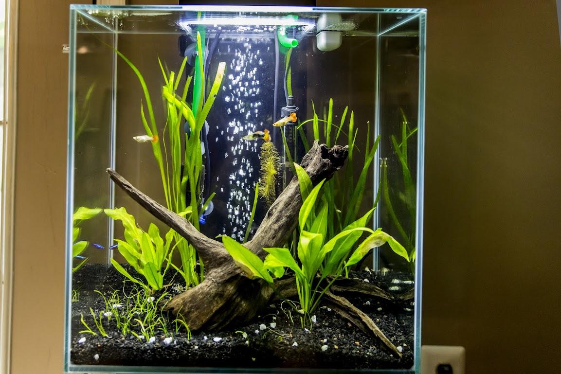 Update On My Fluval Edge 12 Gallon Aquarium Forum