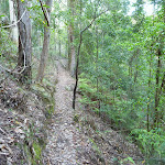 Forest north of Cedar Brush track head (365606)