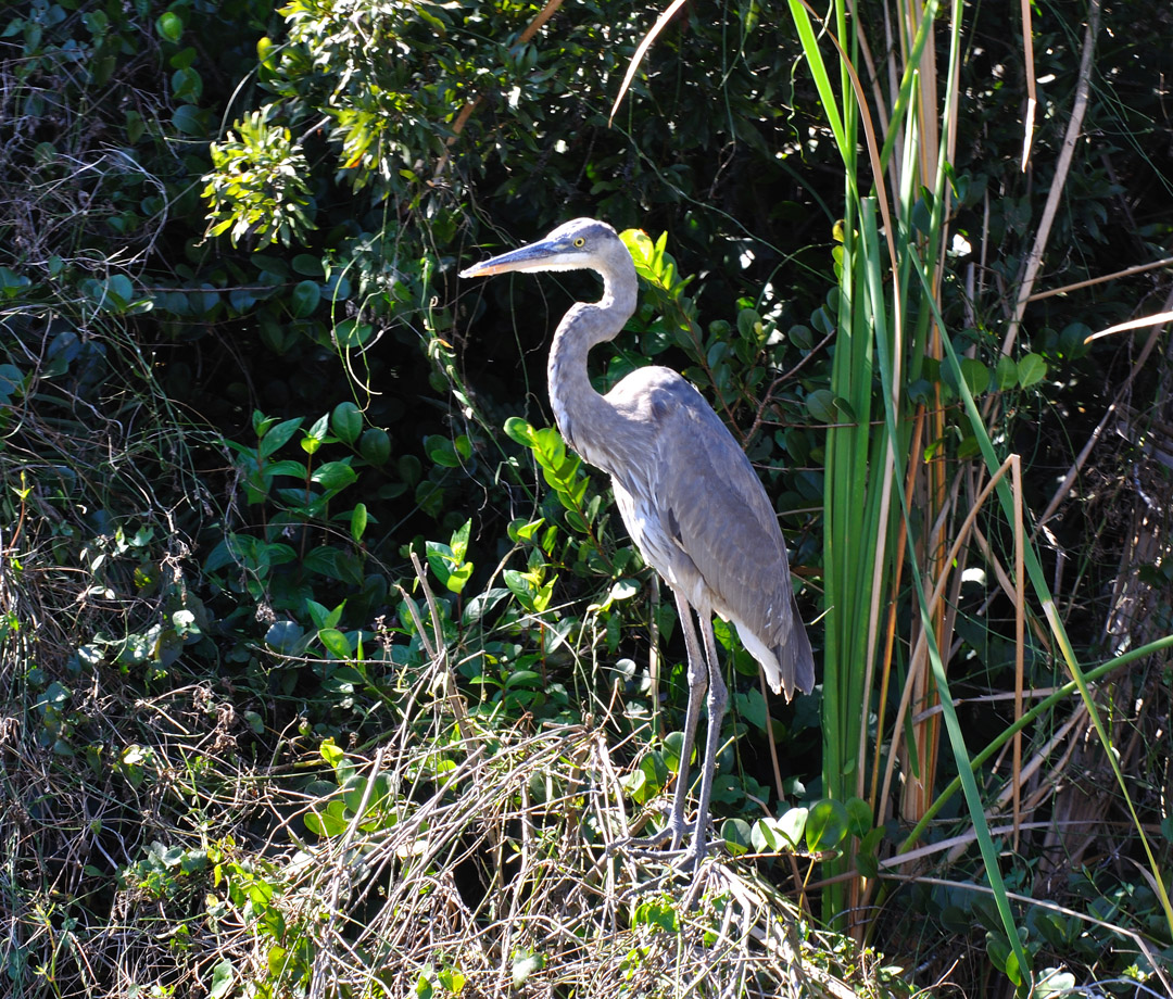 Disabled Travel Oscar Scherer Park Sarasota in addition Oscar Scherer State Park Osprey in addition Oscarschererstateparkphoto10 additionally 20666180 likewise Birds In Florida. on oscar scherer state park osprey florida