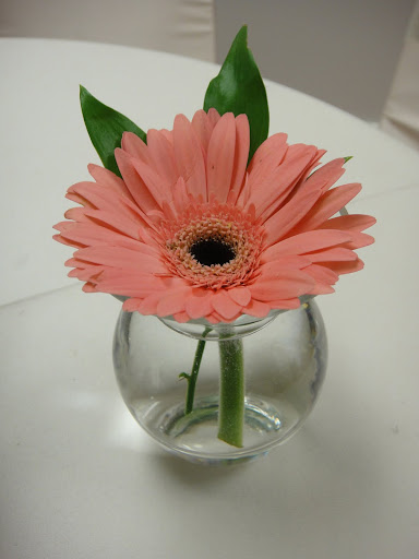 Daisy in a jar