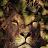 Jemeia Mumford avatar image