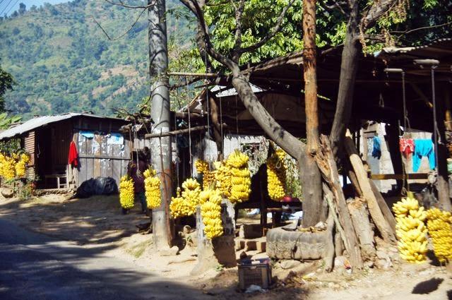 達人帶路-環遊世界-尼泊爾PoonHill健行-路邊香蕉