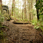 Timber steps on track near the Pines campsite in the Watagans (320705)