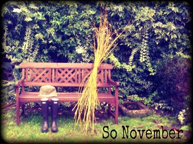 November rain garden. jardín con lluvia en Noviembre