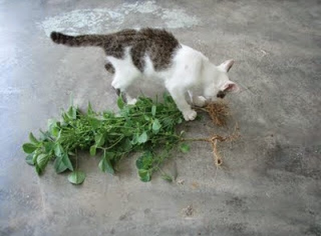 Gambar Kucing Galak godean.web.id