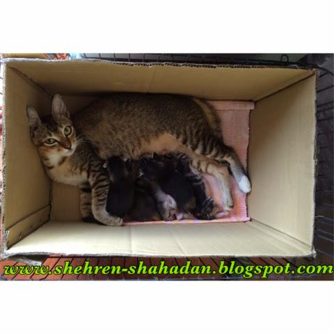 Tips Panduan Penjagaan Amp Kesihatan Kucing Kesayangan Anda