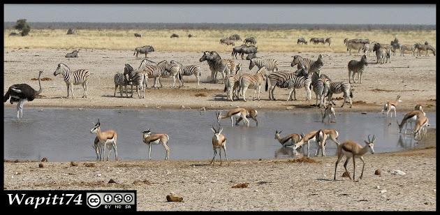 Balade australe... 11 jours en Namibie IMG_0421