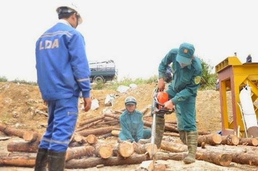 Cưa xẻ gỗ để hỗ trợ việc cứu hộ.