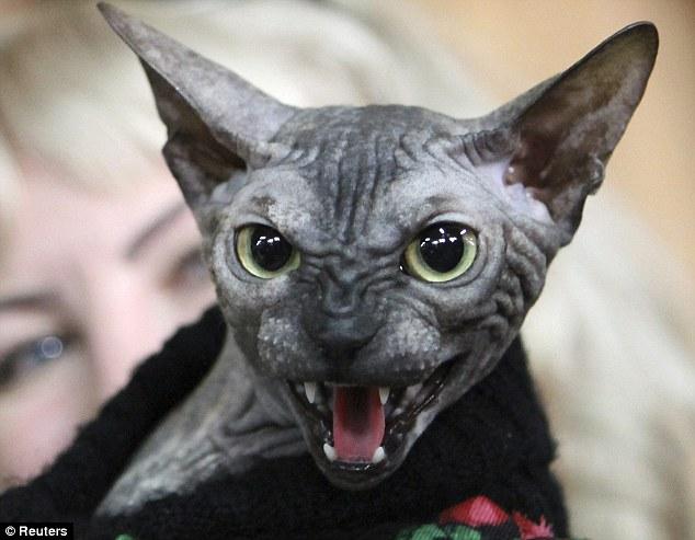 Kucing Paling Menakutkan Di Dunia