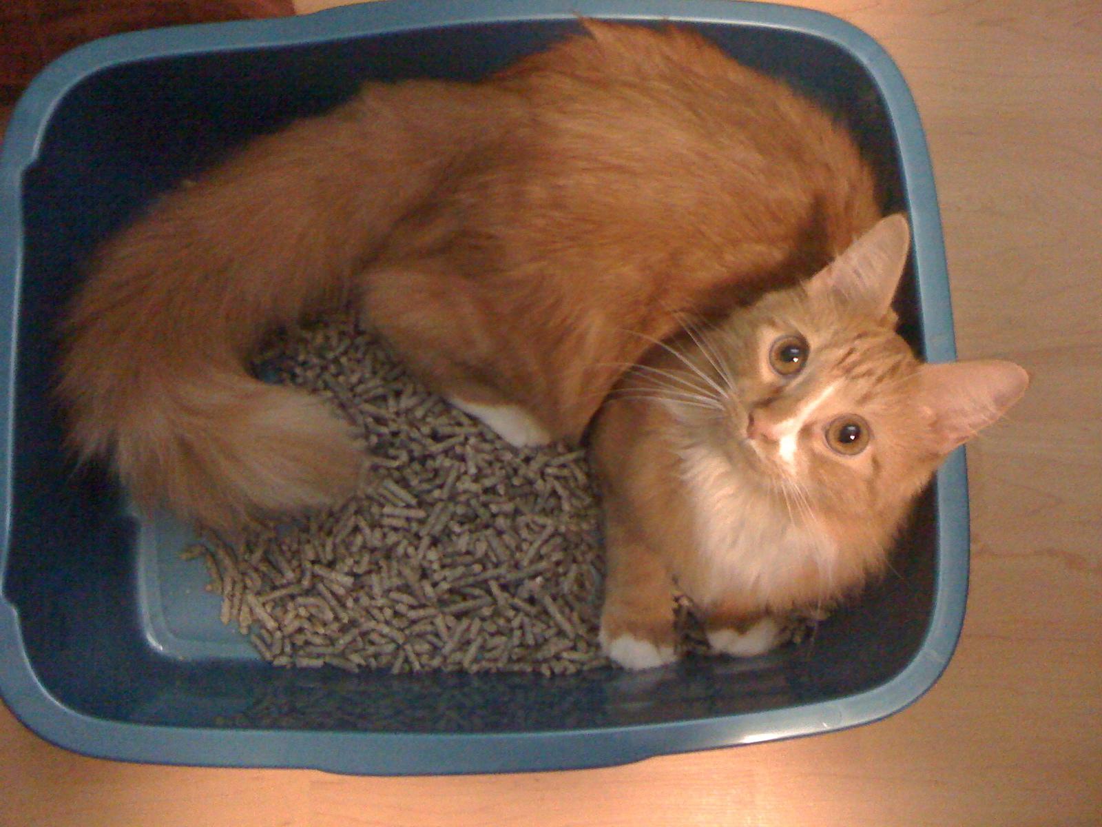 Clay Cat Litter Fangerous