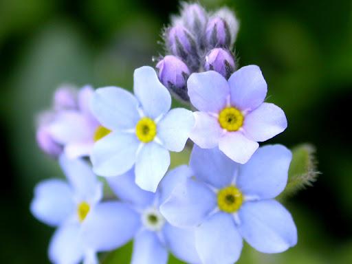 Desktop_wallpaper_flowers.jpg