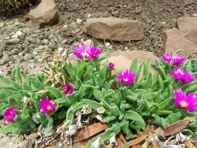 Quelques fleurs IMGP5848