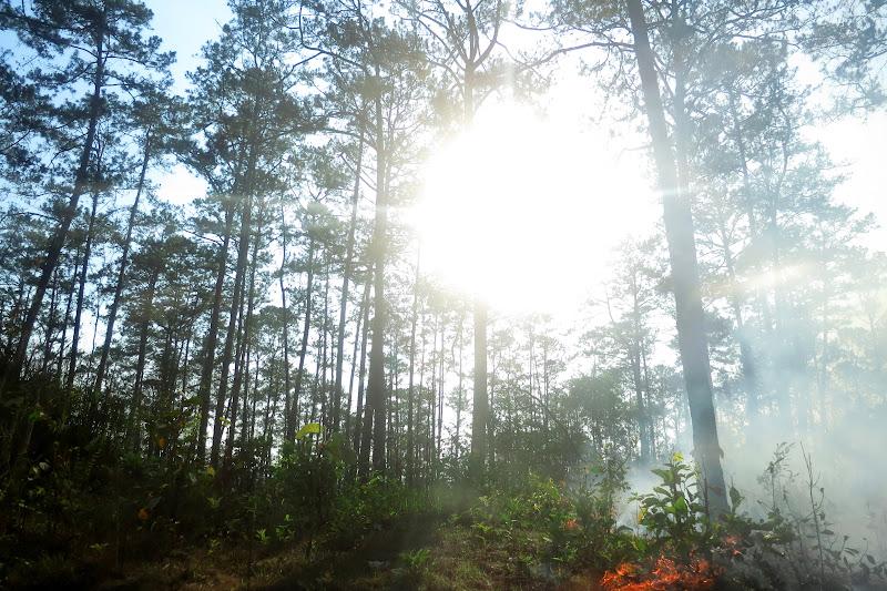 Burning the undergrowth