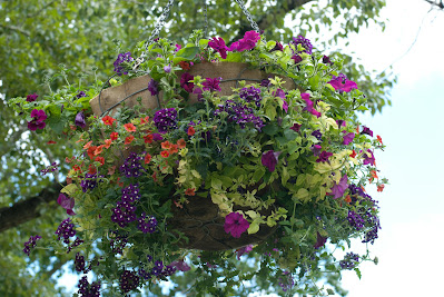hanging flower basket in Prince's Island Park, Calgary