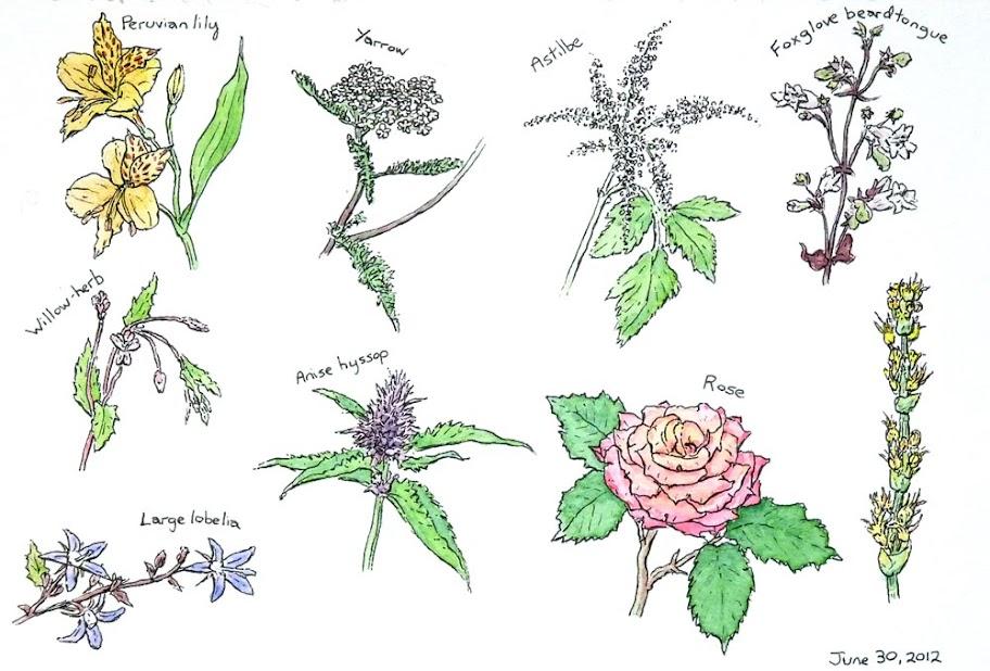 Flowers19