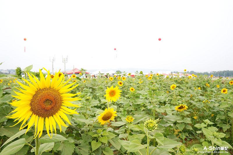 2014年新社花海節與2014臺中國際花毯節9
