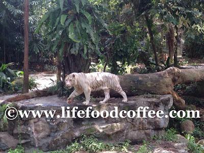 Omar, Zoo Singapore