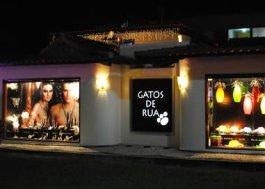 gatos-rua-loja