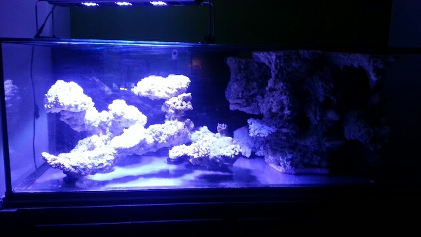 The Cavernous Reef