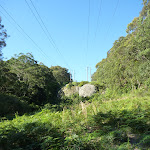 Following The Great North Walk to Yuelarbah Management Trail (339214)