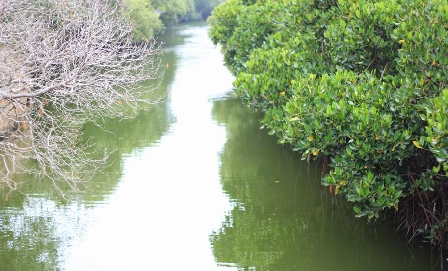 台南安南景點,四草紅樹林綠色隧道-9