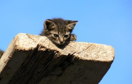 gattino da tavola