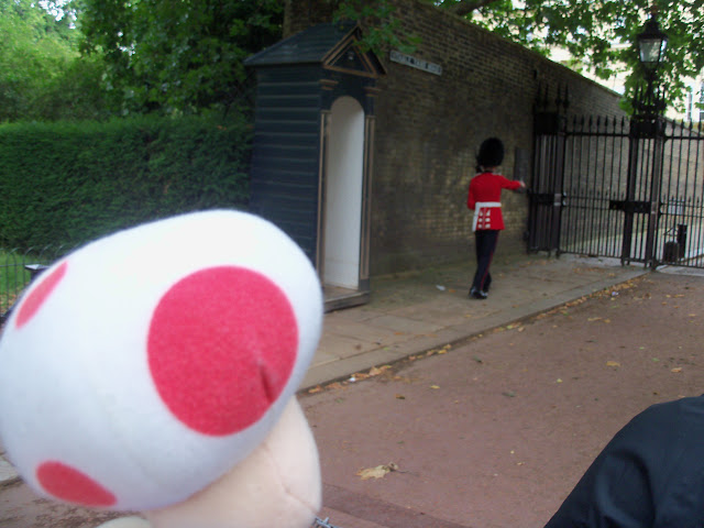 Toad watching the Guard