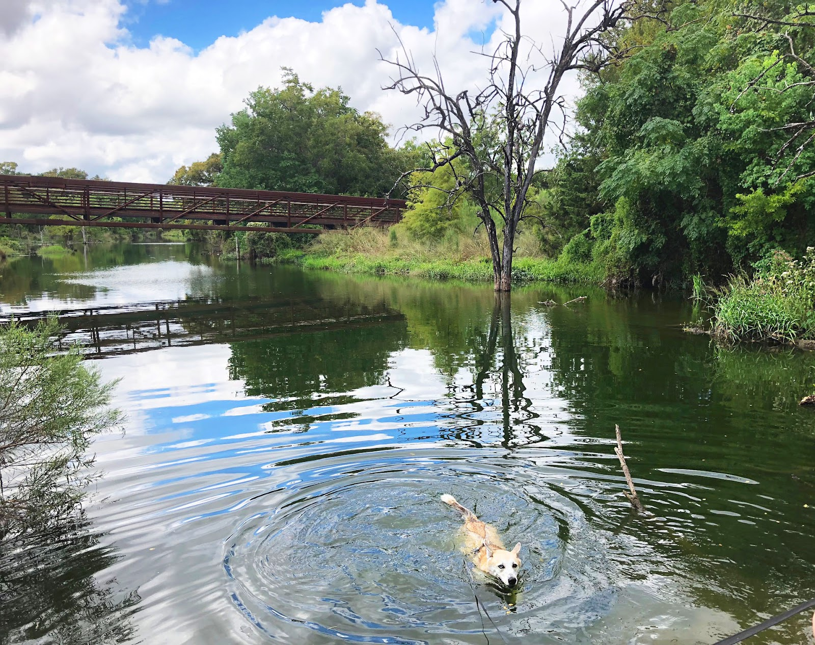 Husky, hike, Brushy Creek